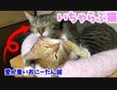 いちゃらぶリア獣な兄弟猫を眺める動画。