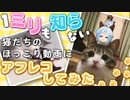 【ミリしら】猫さん?にアフレコしてみた!ฅ*•ω•*ฅ ♬
