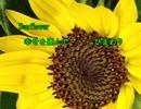 美GUMI  Sunflower  幸せを運んで・・・ひまわり