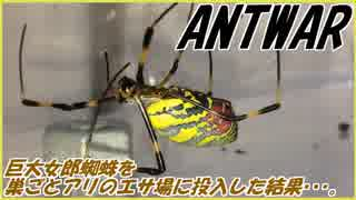 ジョロウグモという強敵を前にしてアリは恐怖心を抱く?