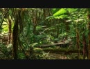オ蘭ウータンの森
