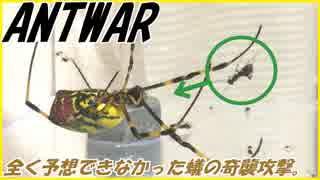 クモの糸にかかったアリ、決死の逆襲!