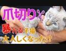 子猫の爪切り!暴れる子猫が大人しくなるまで…