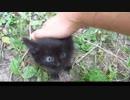 野良の子猫