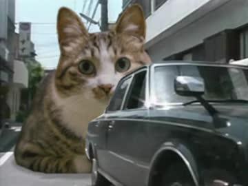 猫に追突されたTNOK