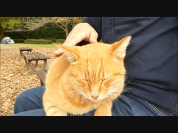 寒すぎて膝の上から離れようとしないかなり迷惑な野良猫www