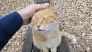 公園のベンチに座ってたら野良猫が強烈な
