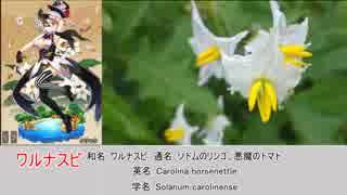 憎き害虫をコロコロするフラワーナイトガール 番外編・植物と花騎士Part1(不定期)