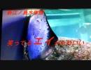 新江ノ島水族館 笑ってるエイがかわいい