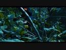 長谷川白紙 - 草木