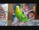 ゴキゲン鳥