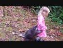 ホモと見る幼女にくっつくハリネズミ