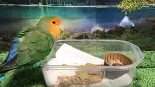 愛鳥と食べよう!野菜とピーナッツのピリ辛ブレッド