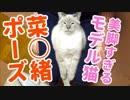 日本一の美脚ネコがこれ見よがしに長い脚を見せつけてきます