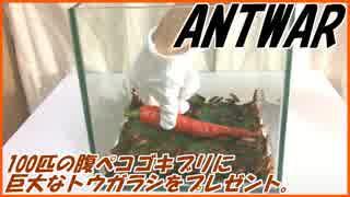 腹ペコなゴキブリ100匹に無駄にでかいトウガラシを食わせる。