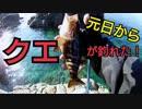 #1【海釣り】元日に釣りしたらクエが釣れた!?【磯でフカセ釣り】