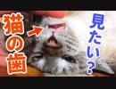 猫の歯がどんな形か知ってますか?じっくり見せちゃいます