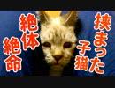【緊急事態】子猫の顔が挟まってしまいました
