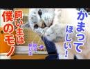 寂しがり屋の子猫が真剣に作業中の飼い主の周りをウロチョロしてきた