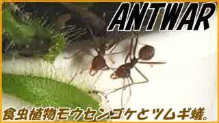 アリの巣に増えすぎた羽虫を食虫植物で退治する!