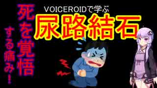 【VOICEROID解説】尿路結石