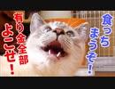 貪欲すぎる子猫が山賊みたいな顔で飼い主を脅してきた