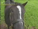 【競馬】引退馬 2005(社台SS)