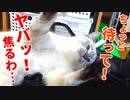 無邪気に遊んでいたらハプニングが発生して子猫が慌てふためく…!