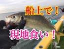 新年初釣り後半戦!LTアジ船釣りで船上現地食い!【もっち釣...