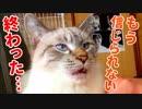 飼い主に裏切られた猫がリストラされたかのような茫然自失顔で訴えてきた