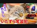 捕まった猫のふてぶてしい顔がかわいすぎてiMac壊されても許しました