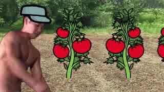 超おいしいトマトを栽培する先輩