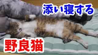 ママに添い寝してくる野良猫ミーちゃん
