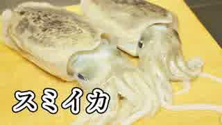 寿司職人によるスミイカの仕込みから握りまで〜How To Make Squid Sushi〜