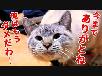いつも一緒に過ごしてきた猫がひょんなことから話を聞かなくなってしまいました…