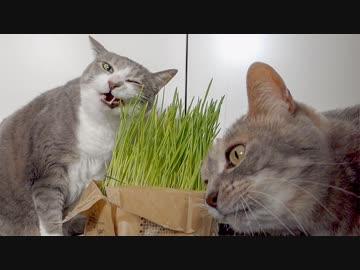 【 Moakri 】 Vegetarian Food