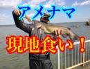 【現地食い】あの方達と!アメナマ釣りに行ってみた!後編【...