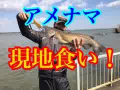 【現地食い】あの方達と!アメナマ釣りに
