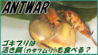ゴキブリに活エサ(カタツムリ)をあげたら食べるの?