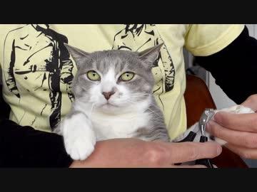 【モアクリ】 猫的ネイルサロン