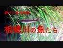 新江ノ島水族館 相模川の魚たち