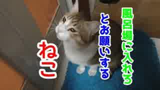 お風呂場に入りたがるうちの猫の目的とは