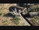 犬の散歩の途中で猫に出会ったのでついていってみた。