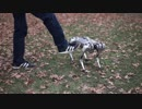 四足歩行ロボット Mini Cheetah(ミニチーター)