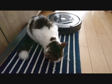 ルンバ「ゴミですね」猫「エサ消えた」