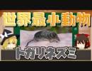 【へんないきもの】世界最小サイズ!トガリネズミ【ゆっくり解説#6】