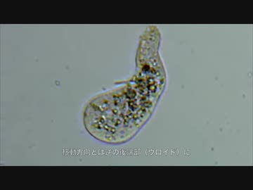 【 Learn slowly? 】 It's Not Just A Nebba! What? The Friends of Amoeba