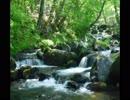 【癒し】森の中の渓流のせせらぎ《10分》(睡眠用BGM・作業用BGM・ASMR)