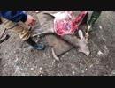 【閲覧注意】熟練猟師の神業シカ解体 ほぼノーカット