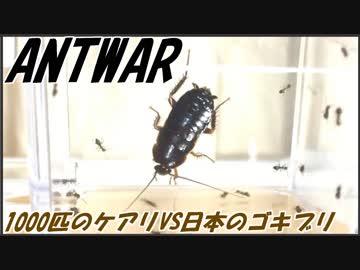 1000匹のケアリVS日本のゴキブリ~黒光りの例のアイツ~
